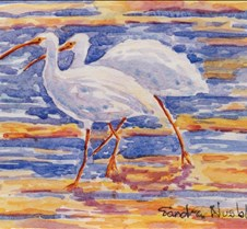 Two Ibis - Signed