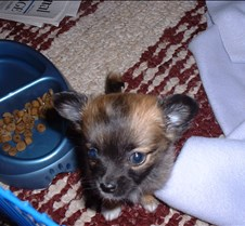 Puppy Picts 008