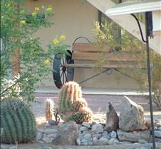 Tucson sunlit cactus 3