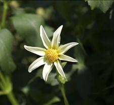 Perky White Flower