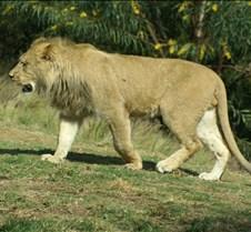 Wild Animal Park 03-09 190
