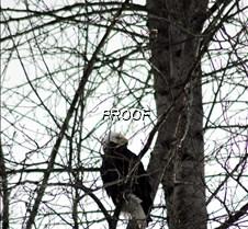 eagletree-5