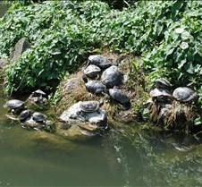 Venetian Turtles