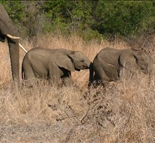 Ivory Lodge Safari Mupulanga0049