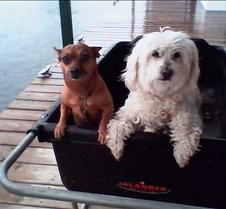 Indy et Toby 2
