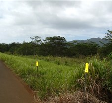 Road out of Kipu Falls