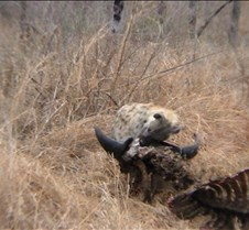Ivory Lodge & Safari Pictures0078