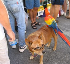Typical Key West dog