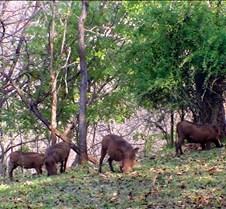 Lokuthal & Safari Lodges & Grounds0017