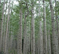Colorado - Aspen Cathedral