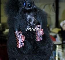 Poodle Parlour 2