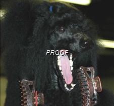 Poodle Parlour 4