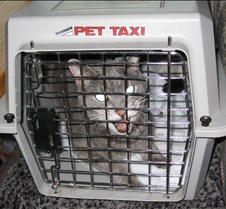The cat always gets the cage