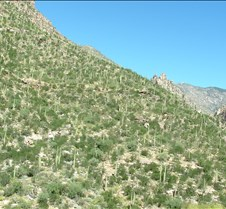 Tucson Sabino Canyon 22