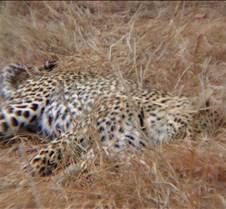 Ivory Lodge & Safari Pictures0032