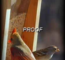 009-1 Cardinal & Sparrow