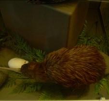 A (Fake) Kiwi Bird