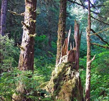 Ketchikan Stump