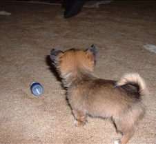 Puppy Picts 013