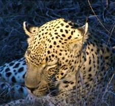 Ivory Lodge Safari Mupulanga0035