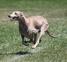 Test_dog_9577Cr