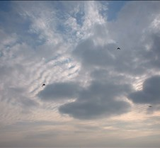 birds in clouds