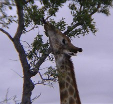 Ivory Lodge & Safari Pictures0123