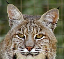 Wildlife Images #28 Photos of animals at Wildlife Images, a rehabilitation center in Oregon. Here's their URL: http://www.wildlifeimages.org/