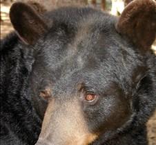 092204 Black Bear Janie 37