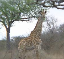 Ivory Lodge & Safari Pictures0081