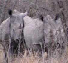 Ivory Lodge Safari Mupulanga0021