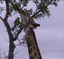 Ivory Lodge & Safari Pictures0124