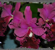 Orchid (3 blooms)