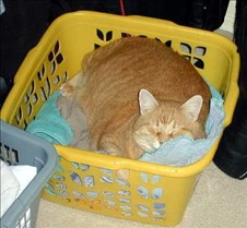 Hiding in the laundry basket