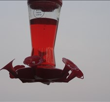 hummingbirdthrough2sign