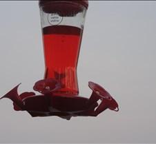hummingbirdthrough2sign