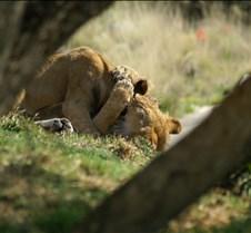 Wild Animal Park 03-09 163