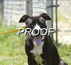 071514_PetOfTheWeek_Dog