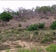 Ivory Lodge Safari Mupulanga0004
