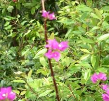 Flowers near Wailua River