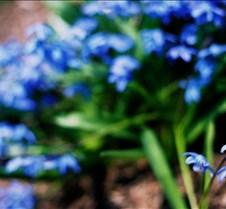 Misc. Flowers 01-05-04