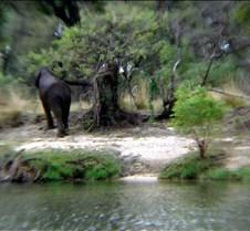 Sunset River Cruise Zambezi River0018