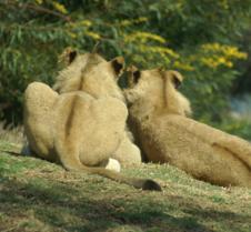 Wild Animal Park 03-09 180