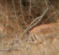 Ivory Lodge & Safari Pictures0160