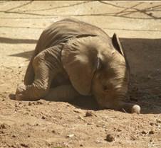 Wild Animal Park 03-09 083