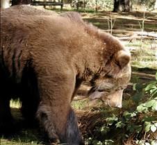 013004 Kodiak Female 101