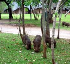 Lokuthula Safari Lodge Zimbabwe0019