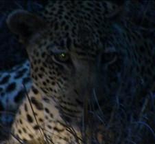 Ivory Lodge Safari Mupulanga0038