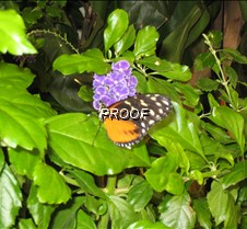 ButterflyExhibit-21