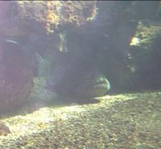 Miami Seaquarium 059